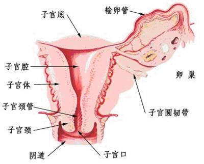 霉菌性阴道炎怎么引起