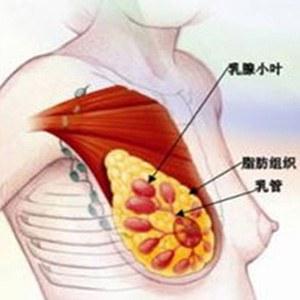 乳腺增生的饮食调理