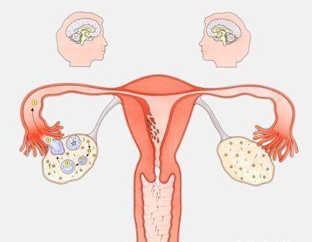 卵巢功能衰退的症状