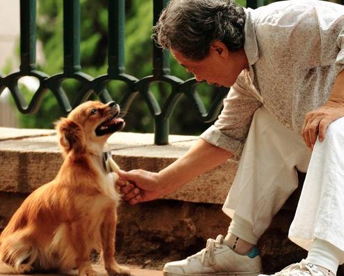 老人适合养什么样的宠物狗