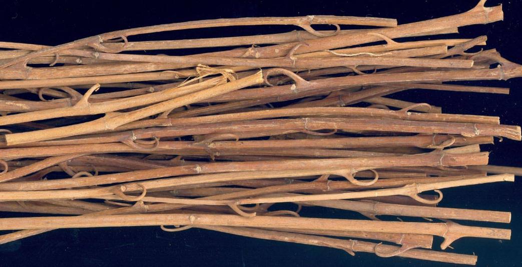钩藤的功效与作用有哪些
