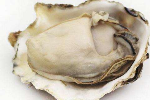 牡蛎的功效与作用