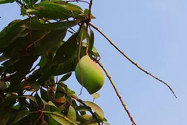 月经期不能吃什么水果