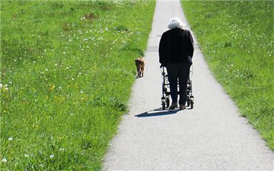 适合老人养狗的类型