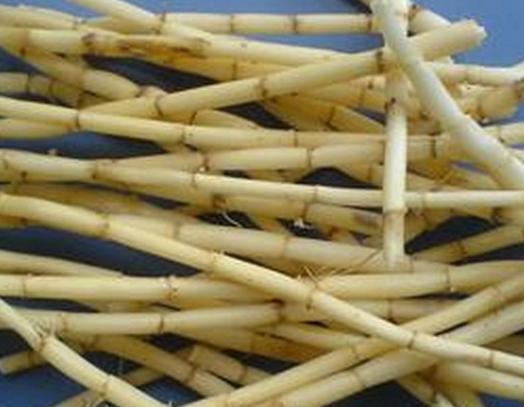 白茅根的作用与功效有哪些