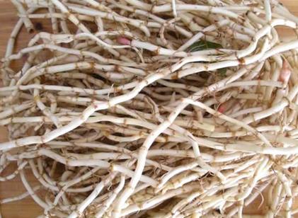 鱼腥草的功效与禁忌有哪些?