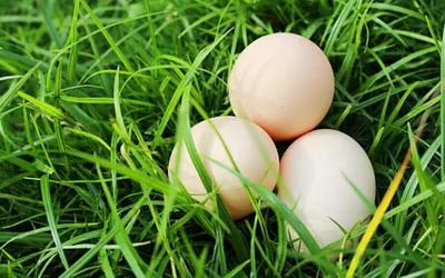 怎么用鸡蛋去湿气