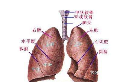如何排出体内毒素 最实用的五脏排毒法