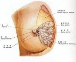乳腺增生怎么办 艾灸治疗乳腺增生