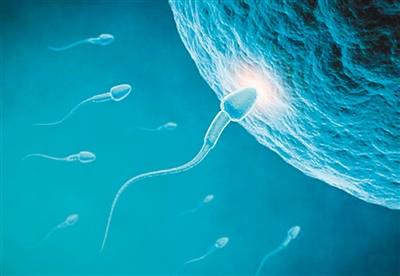 怎样提高精子质量和活动力