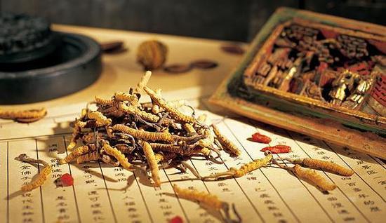 冬虫夏草功效作用和方法