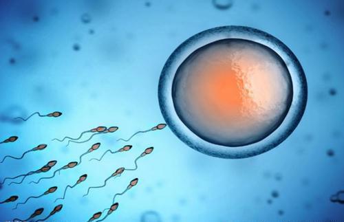 精子少怎么补 补充蛋白质与精氨酸