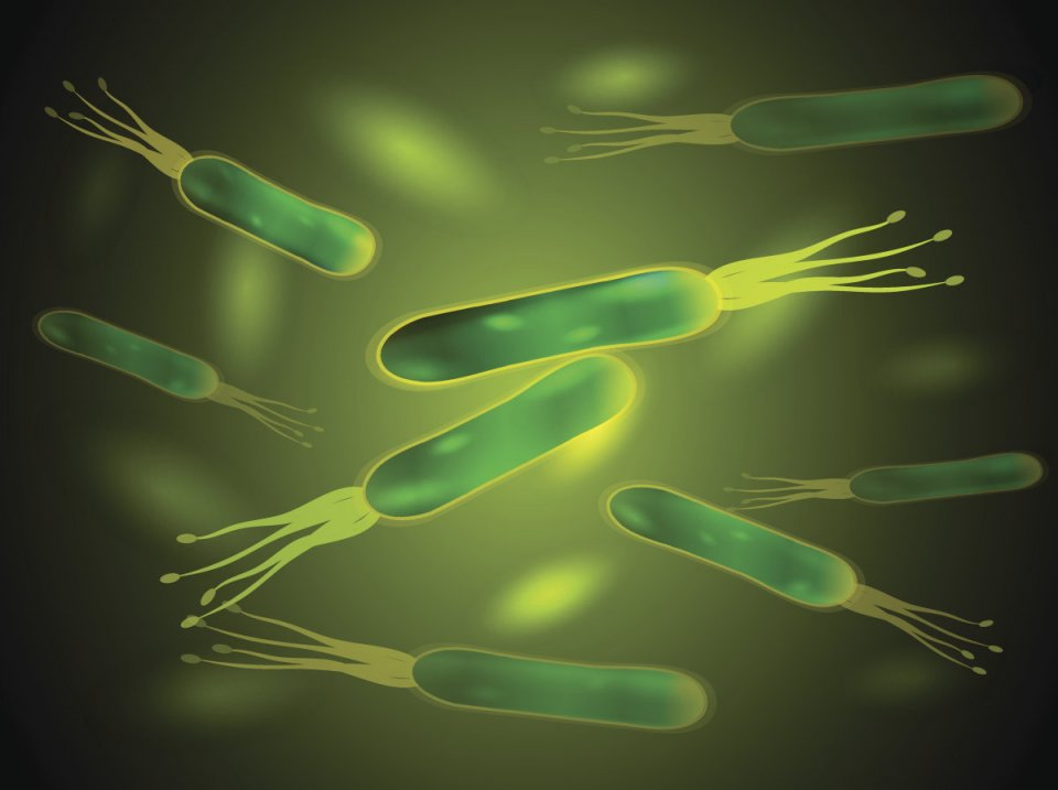 聚焦| 清除幽门螺旋杆菌要吃药?更安心的方式来了